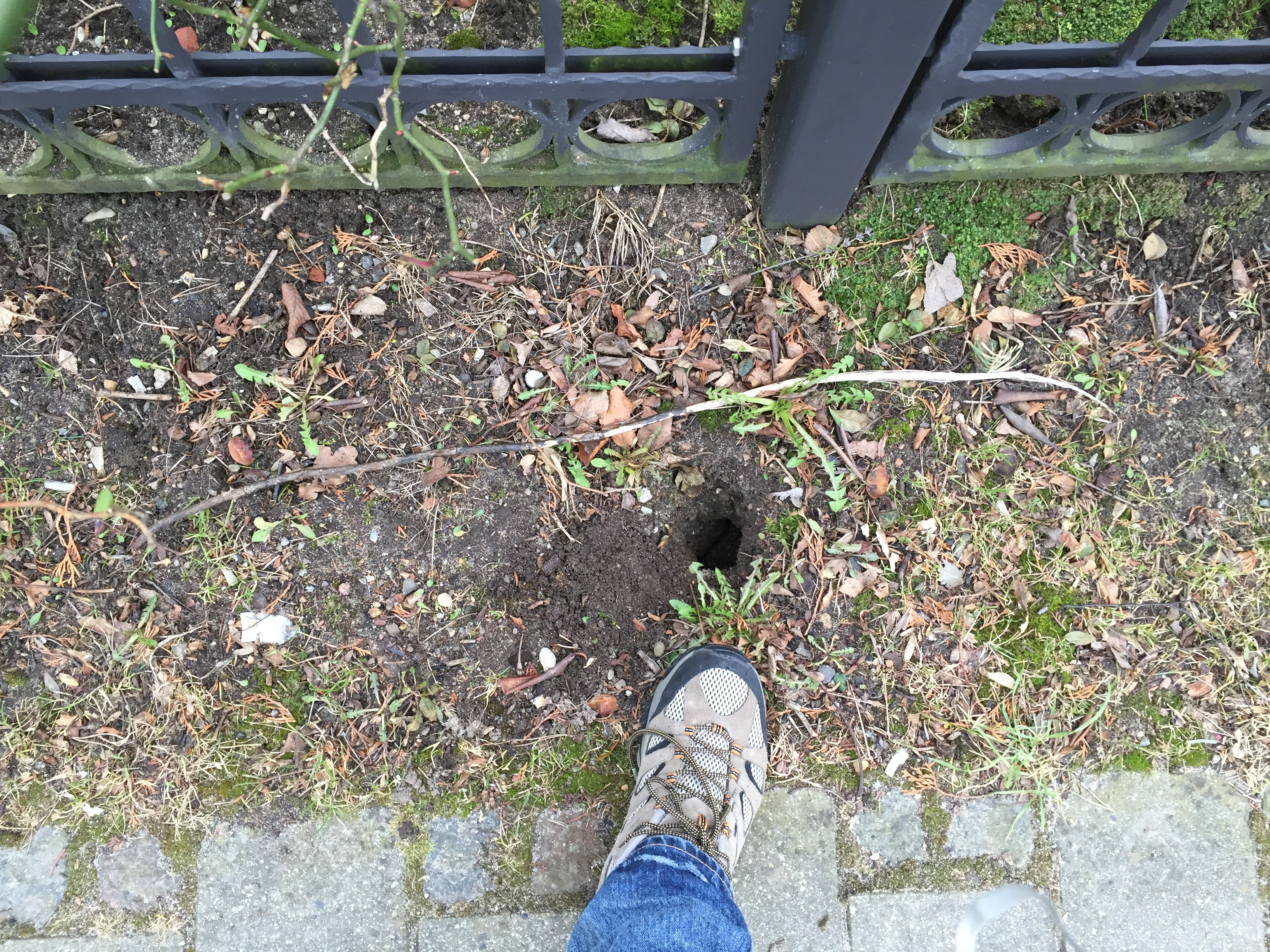 rottehuller i græsplæne